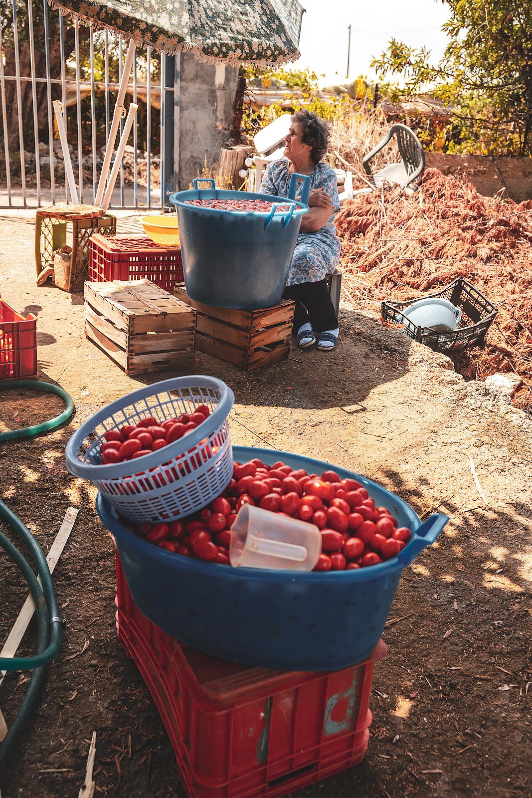 Making of tomato sauce